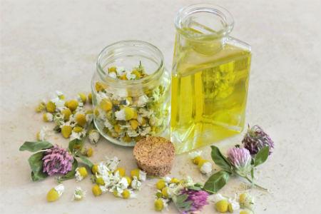 manzanilla Planta medicinal
