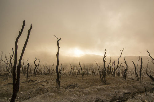 efectos cambio climatico