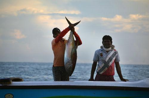 pesca masiva atun rojo