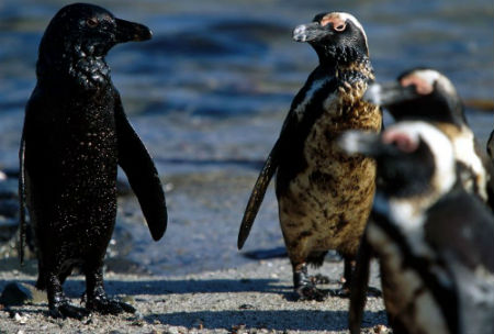 proteger a los pingüinos