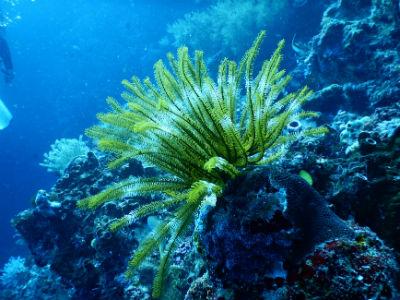 Donde se encuentran estos ecosistemas fragiles