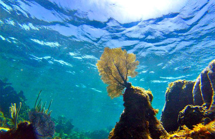¿Qué es la fragilidad de los ecosistemas?