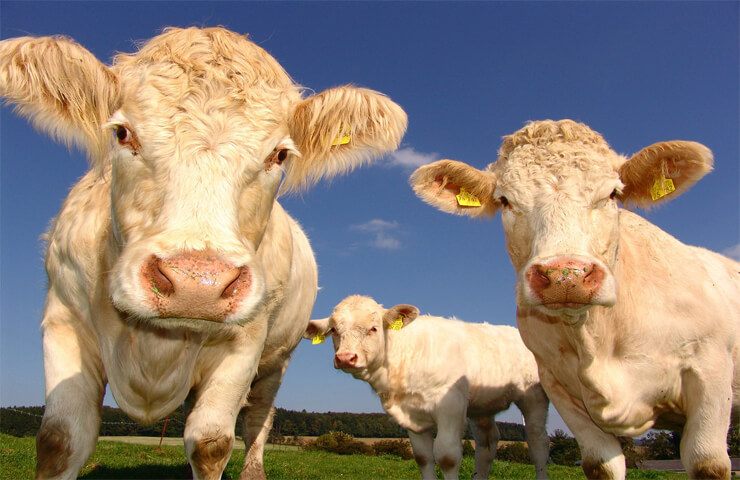 Impacto medioambiental de la ganadería