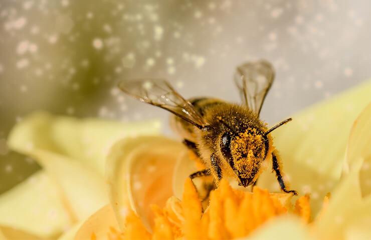 Importancia de las abejas para el planeta