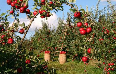 Principales cultivos