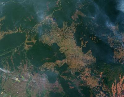 Deforestacion amazonica