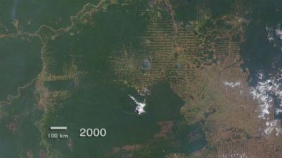 Deforestacion del Amazonas