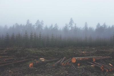 Paises con mas deforestacion