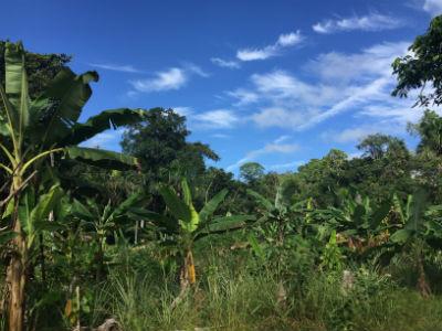 Selva amazonica bosque primario