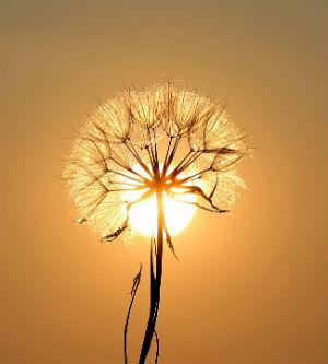 Aprovechar la luz natural