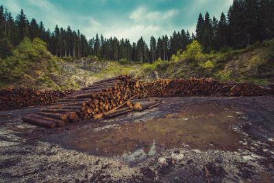 Deforestación quema y tala