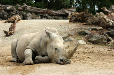 Extinción de animales