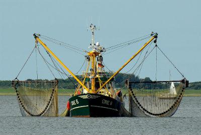 Pesca indiscriminada